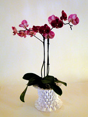 Vase: inside out waterbombs (Danielle Verbeeten) Tags: art paper origami danielle papier paperfolding papiroflexia folding vouwkunst papierkunst papiervouwen waterbombbases