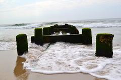 CSC_0374 (dragonfly21466) Tags: ocean seaweed beach pier jerseyshore springlakebeach nikond3100
