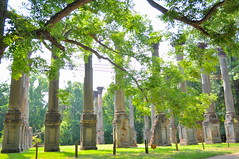 Windsor Ruins (1861-90) (Victoria Lea B) Tags: mississippi ruin column natcheztraceparkway windsorruins antebellumarchitecture claibornecounty oldsoutharchitecture smithcoffeedabiellii