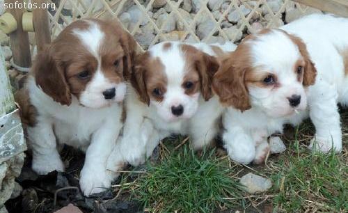 Filhotes de cachorros 44