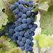 Jordan Harvest 2013 Dilworth Cabernet Sampling 001.jpg