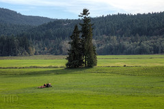 """""""Standoff"""" Limited Edition: 10 Prints (Toad Hollow Photography) Tags: trees tractor canada mountains green heritage history bc farm fineart victoria vancouverisland valley pastoral limitededition hdr cowichan cowichanvalley slicesoftime ringexcellence"""