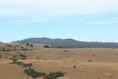 6th Mile Landscape