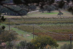 Vineyard (over.leaf) Tags: austin vineyard picnic texas wine winery atx driftwoodestateswinery