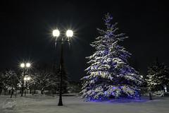 Wauwatosa Christmas 2013 (CJ Schmit) Tags: christmas longexposure winter snow tree wisconsin canon lights lowlight christmaslights led milwaukee wauwatosa holidaylights mke shutterdrag 2013 canonef1740mmf40lusm villageofwauwatosa 5dmarkii canon5dmarkii cjschmit wwwcjschmitcom cjschmitphotography