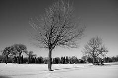 Moins 16°C/3° Fahrenheit (bob august) Tags: trees winter bw snow blackwhite nikon noiretblanc hiver arbres neige villeray d90 parcjarry montréal nikkor18135mm nikond90 décembre aperture3