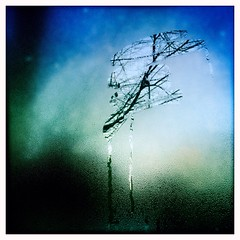 morning blue tree apple window iphone hipstamatic (Photo: SOVA5 on Flickr)