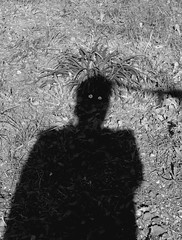 My Personnality is my shadow 3 (yonkis_at_34) Tags: flowers shadow portrait sun self eyes peace montpellier photograph regard personnality vision:outdoor=0958