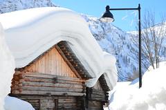 Bosco Gurin 2014 (Photo by Lele) Tags: ticino valle neve record inverno montagna bosco maggia gurin grossalp