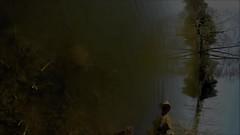 Avant qu'elles ne croassent . . . (Daniel.35690) Tags: film fleurs soleil video lumière lac bretagne breizh reflet ciel amour promenade bateau animaux amis campagne sourire arbre plaisir flowerpower ballade transparence insectes jonquilles etang vidéo 2014 heureux réflection vitré grenouilles détente nouveauté surprenant provoc tétards plandeau prisedetête illevilaine balazé goprohero3