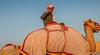Deserts and Camels 131107 17_10_16 (Renzo Ottaviano) Tags: race al dubai desert united racing course emirates camel arab lorenzo races camels corrida emirate deserts uniti renzo unis arabi carrera corsa emirati unidos camellos chameaux árabes kamelrennen صحراء سباق arabes ottaviano camelos emiratos emirados vereinigte arabische cammelli emiratiarabiuniti émirats الهجن هجن سباقات المرموم marmoun