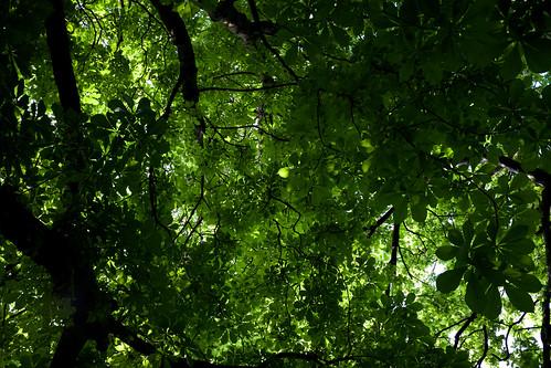 Foliage ©  Still ePsiLoN