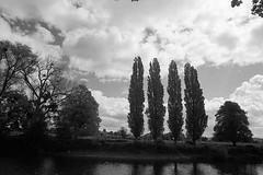 F3-Tri-X-012 (SteveFE) Tags: trees 3 river four nikon kodak iso400 trix may cypress f3 24mm hereford tamron 19 6th wye 2014 adaptall aculux 25