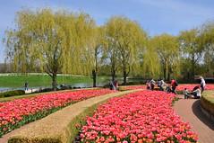 Tulips at the Crescent (teohwp85) Tags: chicago garden illinois tulips crescent glencoe botanic