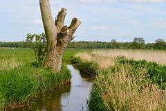 Mooreiche (FHH62) Tags: nature landscape daylight oak moor landschaft eiche d3200 tangstedt fhh1962 fredheitmann