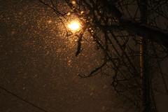 Snowlight-Night. (Greyframe) Tags: road street winter light orange snow newyork blur monochrome night grey nightshot snowstorm snowfall condition greyframe nostorm