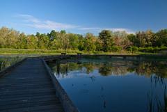 Wingfield Pines Boardwalk (Nikon Guy 56) Tags: blue trees sky reflection green nature water nikon boardwalk d60 wingfieldpines