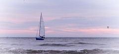 You can't discover new land without first losing sight of the shore (babs van beieren) Tags: ocean pink sea clouds northsea sail