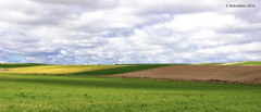 paisaje 95 (rokobilbo) Tags: green rural landscape walk land fields grassland skyblue castilla