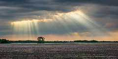 Sun Rays (WherezJeff) Tags: ca canada tree field clouds smoke alberta rays atmospheric crepuscular optics saintmichael