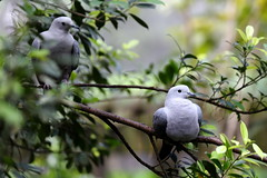 Peaceful Doves (grass-lifeisgood) Tags: park bird nature ecology canon is peace dove wildlife free telephoto ii rest species habitat ef 70200mm f28l