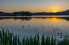 I never tire of the evening light :) (poach01) Tags: blue sunset summer sky plants sun lake water yellow sunrise reflections reeds fishing pond ripples loch