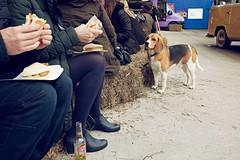 Mercazoco Abril Gijón Feria de Muestras mascotas