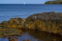 feltzen south (angie pineappletree) Tags: atlantic coast ocean sea rocks water boat sail lunenburg novascotia canada