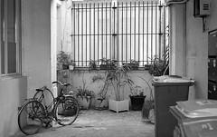 Parisian Courtyard (Amelien (Fr)) Tags: blackandwhite bw film monochrome analog zeiss noiretblanc kodak tmax hc110 nb contax 400 g1 epson expired 45mm argentique 131 v550 planar 2016 pellicule alr dilutionb filmisnotdead 45f2 expire homescanned believeinfilm capturedonrealfilm