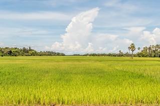 angkor - cambodge 2014 18