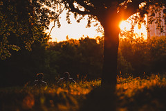 Primrose Hill, London sunset (millerartwork) Tags: park friends sunset london photo primrosehill remainsoftheday lukemiller mu9a7122lnd
