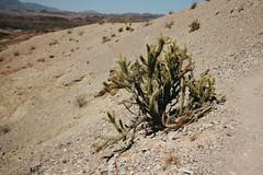 5R6K2594 (ATeshima) Tags: arizona nature havasu