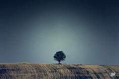 one (Shorena Beruashvili) Tags: tree georgia photography landscapes magic minimalism signagi
