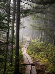 Foggy morning on the bowl trail. (Dean Ruben.) Tags: morning nature nationalpark foggy bowl explore trail acadia bowltrail