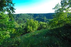 Overlook (wackybadger) Tags: tree wisconsin forest nikon overlook slope nikond60 lacrossecounty wisconsinstateforest wisconsinstatenaturalarea sigma1020mmf4exdchsm northeastcouleeoakwoodlandsna sna597 couleeexperimentalstateforest