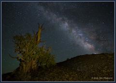 Bristlecone and Stars 1705 (maguire33@verizon.net) Tags: california tree pine stars us ancient unitedstates galaxy bristlecone milkyway