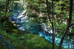 Fresh green () Tags: mountainstream shirakurakyo hamamatsu leaf leaves mountain tree river forest green                                 pl nd