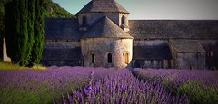 FRANCE - Provence, Abtei de Snanque, 75140/6809 (roba66) Tags: travel sculpture plants france flores color colour tourism church nature fleur abbey landscape reisen flora frankreich urlaub natur flor pflanzen lavender kathedrale catedral kirche skulptur paisaje visit colores explore monastery provence iglesias landschaft lavande francia franca kloster voyages camargue bloem lavanda flori franceprovence abtei camarque coleur santuarios naturalezza provenca lavendelfelder roba66 lavederfields abteidesnanqueabbeysnanque