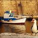 Duck walking / νησσα περιπατουσα