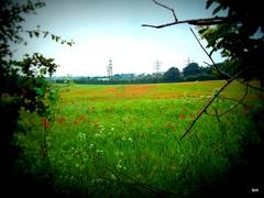 kirkby in ashfield (kelvin mann) Tags: poppy ashfield nottinghamshire kirkby poppys kirkbyinashfield portlandpark