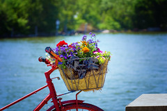 Bringing Flowers (Tarq Photography) Tags: flowers red water bike afternoon basket sunny