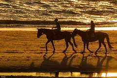 ... riding at the beach ... (wolli s) Tags: flickr egmondaanzee noordholland niederlande nl riding beach reiten am strand pferde pferd horse horses sun down sundown gold golden