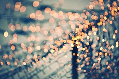 Sea of lights (Juste Pixx) Tags: blue germany lights dof bokeh leipzig depthoffield dreamy shallowdof canon6d canon13520