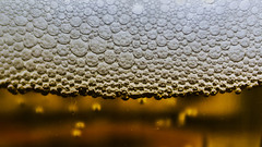 Beer bubbles (Ignacio M. Jimnez) Tags: white blanco beer yellow cerveza bubbles amarillo macromondays