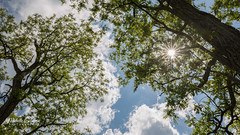 Summer at Last! (Michelle Coleman) Tags: trees summer sky clouds starburst