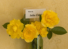 Julia Child Rose
