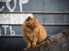 Street cat 153 (Yalitas) Tags: pet cats cat canon kat feline chat kitty gato felino katze katzen kot kedi kass gatta streetcat kotka  kocka  katte  katzchen kottur