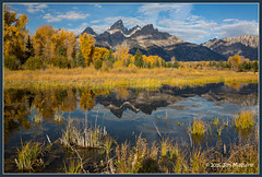 Schwabacher's 1802 (maguire33@verizon.net) Tags: us unitedstates moose snakeriver wyoming grandtetonnationalpark schwabacherslanding
