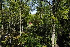 MEES20130527-0248 (michel mees) Tags: garden japanese denhaag thehague japansetuin