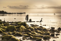 IMG_1719 (Shane Carter Photography) Tags: beach animals sunrise mchalepark
